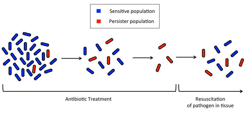 bacteries-persister